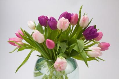 tulip-1230520_1920