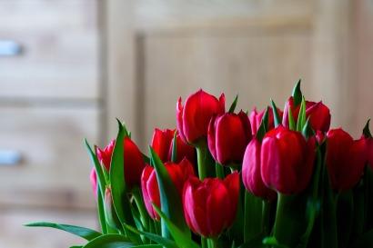 tulips-1036779_1920