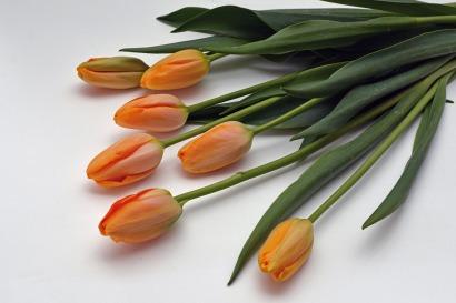 tulips-1231357_1920